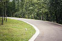 蜿蜒的林间小路