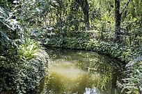 满是绿植的小河流