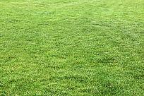 大片绿色草坪草地