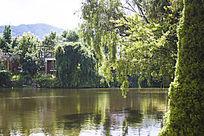 清澈的湖水和绿树