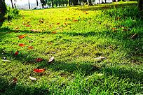 阳光照射下投影在草丛中的树影