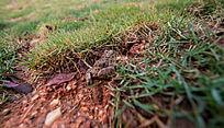 草丛里的青蛙