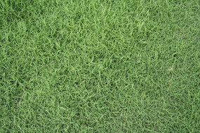 俯拍绿草坪