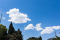 蓝天白云树木
