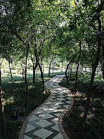 美丽的林间小路
