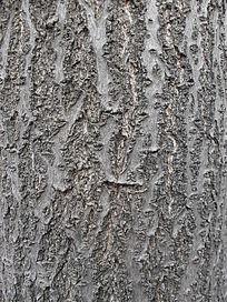 桐树皮-纹理素材
