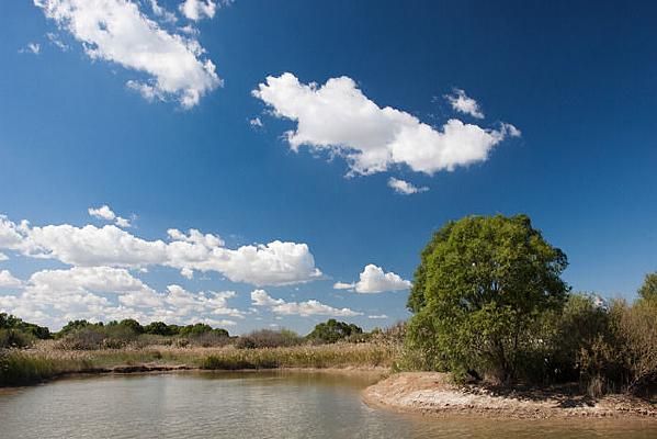 原生态湿地风光