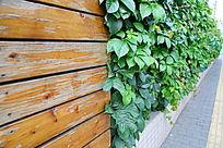 布满爬山虎的木板墙背景