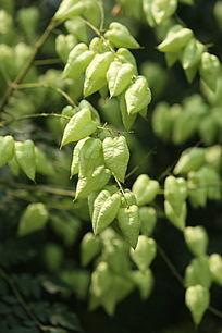 鼓泡的绿色小花朵