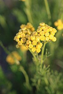 一簇黄色小花