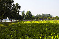 高楼与草坪