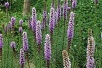 唯美紫色植物背景