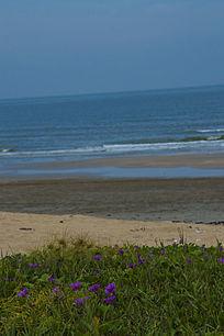 海滩沙滩边的小花野花紫色小花