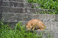石阶上寻食的小猫