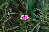 草地里的小红花