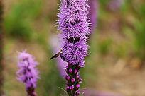 梦幻般美丽的紫花
