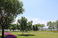 草坪树鲜花