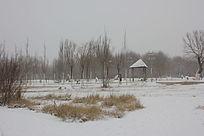 冬日的休闲场所图片