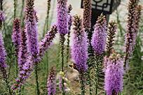 唯美梦幻的紫花
