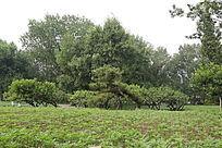 植物园绿化景观