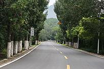 山区的绿化公路