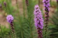唯美的紫花束