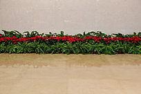 红花绿草成排摆放