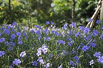 树林中的温馨的喇叭花丛