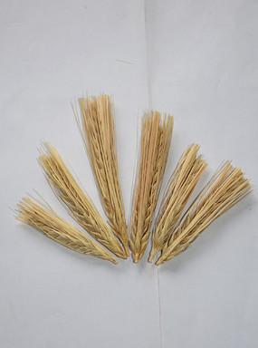 整齐排列的大麦穗