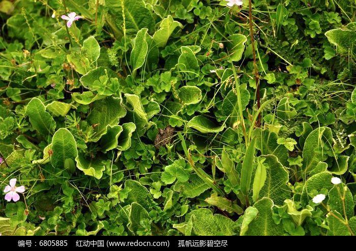 夏天的绿草地图片