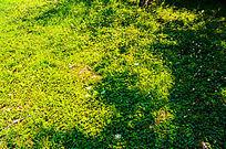 阳光下的草坪对比色