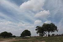 草原美丽景色