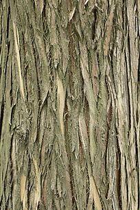 树干纹理贴图