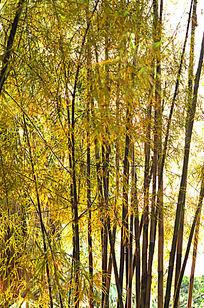 唯美竹林风景图片