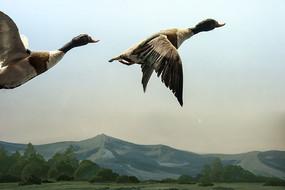 飞翔的大鸟