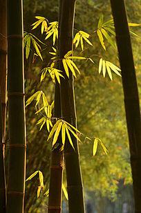光影竹林风景图片