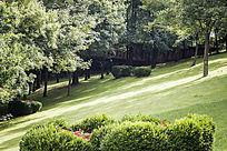辽阔的草坪与绿植