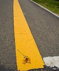 马路标线上的黄色小花