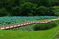 美丽的荷花池
