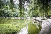 清澈的湖水和翠绿的柳树