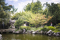清澈的湖水与绿植