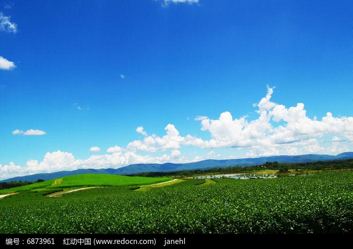 茶园风光景色图片