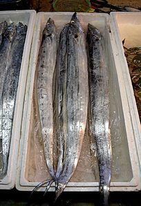 东海大带鱼