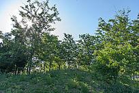 清晨阳光中的一片树林