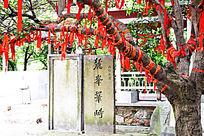 寺庙里的许愿树