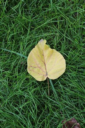草地上的落叶