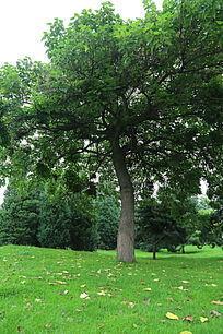 公园绿树草地