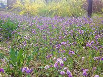 美丽紫花背景图案