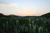 夕阳下的山脉与农作物