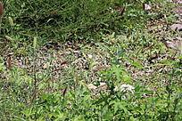 野草背景图案